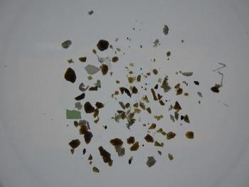 回収したミクロプラスチック.jpg